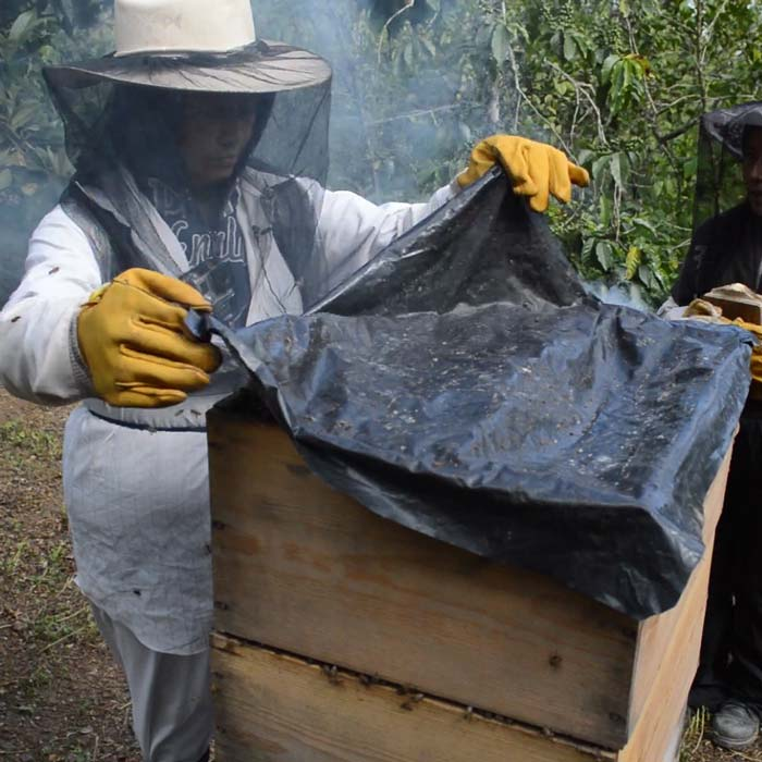 Beehives to earn a living